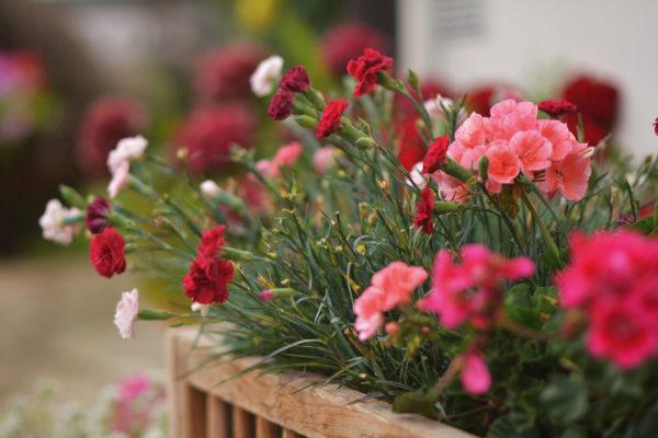 Blumenzauber am Valtelehof